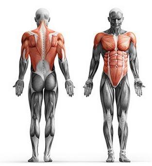 dip station fitnes naprava mišice
