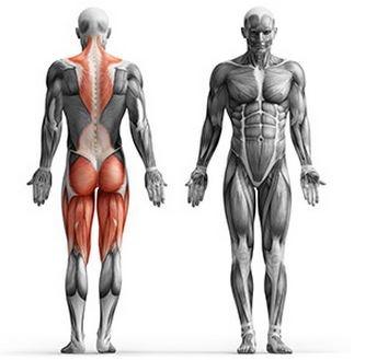 za mišice hrbta zadnjice ter stegenjske mišice