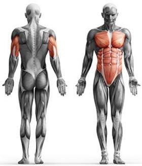 vadba za ramena in trebuh